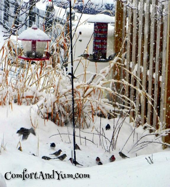 Backyard Birdies in Snow